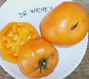 Dr. Wyche's