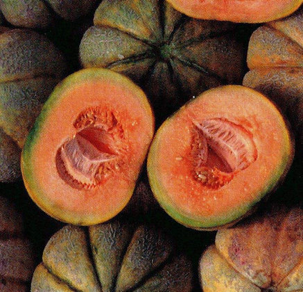 Melon - Oka