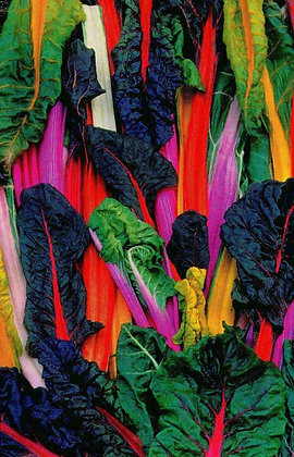 Chard - Five Colour Silverbeet