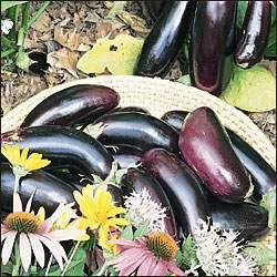 Eggplant - Diamond