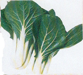Cabbage - Pok Choy Chinese