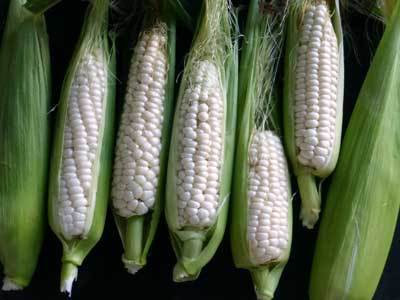Corn - Luther Hill