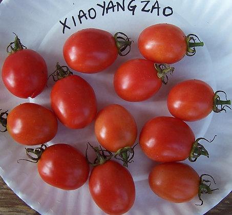 Xiaoyangzao