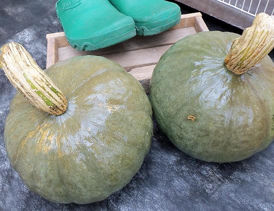 Squash - Green Hokkaido