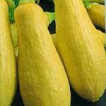 Squash - Vegetable Marrow