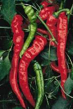 Pepper - Jimmy Nardello Sweet Italian