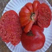 Sicilian Saucer