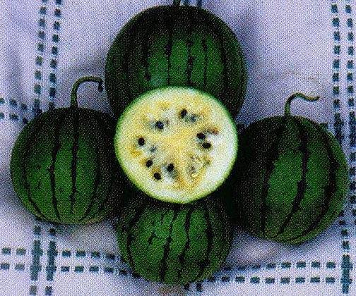 Watermelon - Cream of Saskatchewan