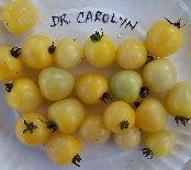 Dr. Carolyn