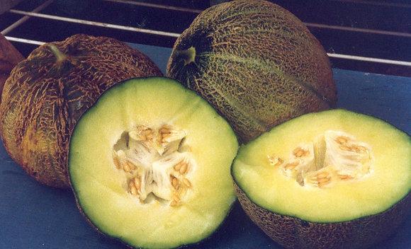 Melon - Montreal