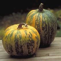 Pumpkin - Kakai