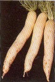 Radish - Chinese White Daikon