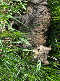 Lucy in the grass
