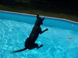 Jovi jumping into pool