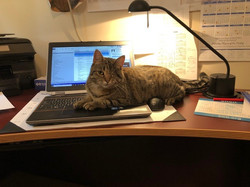 Lucy at work