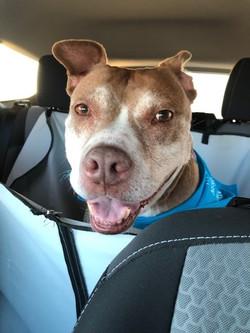 Sassy in car