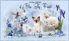 Banner-Blue-Sky-Pearls.jpg