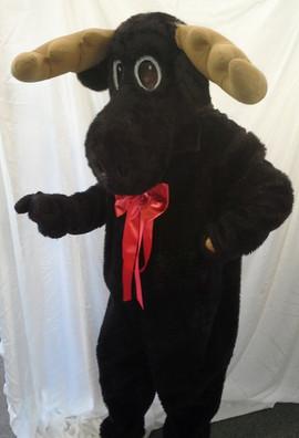 moose-rental.jpg