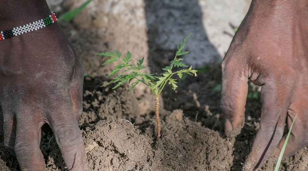 person-planting-tree.jpg