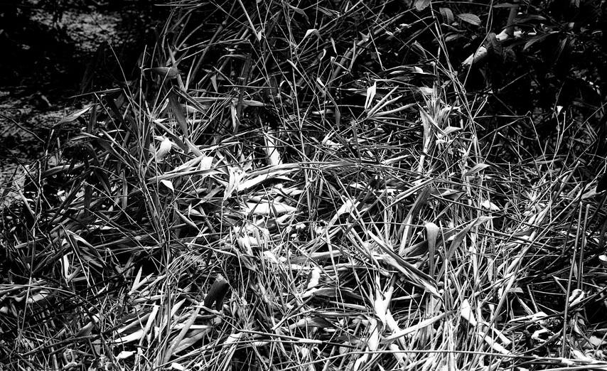 35mm shoot069.jpg
