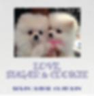 Screen Shot 2020-01-16 at 9.13.38 PM.png