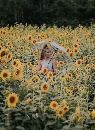 msp - sunflowers-59.jpg