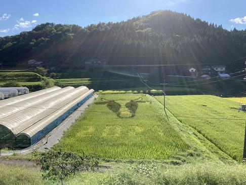 藤若農産の田んぼアート2021