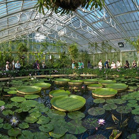 Saving Our Plants Through Ex Situ Conservation