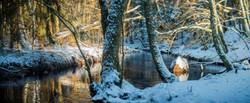 The-Snowy-creek