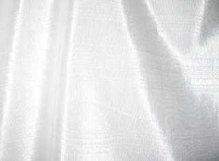 Bengaline - White