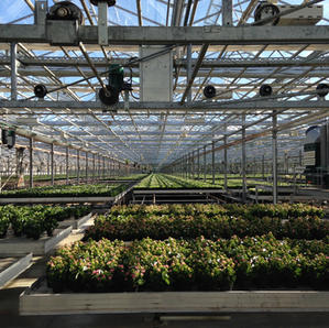 Digital twin of greenhouse production flow