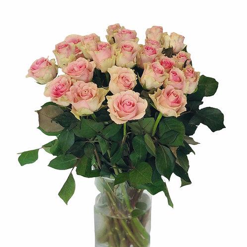 Rožės - 60cm (žalsvos su rožiniu viduriu)