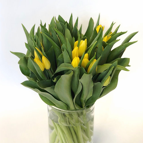 Tulpės (geltonos)