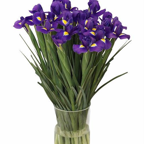 Irisai, 15vnt. (mėlyni)