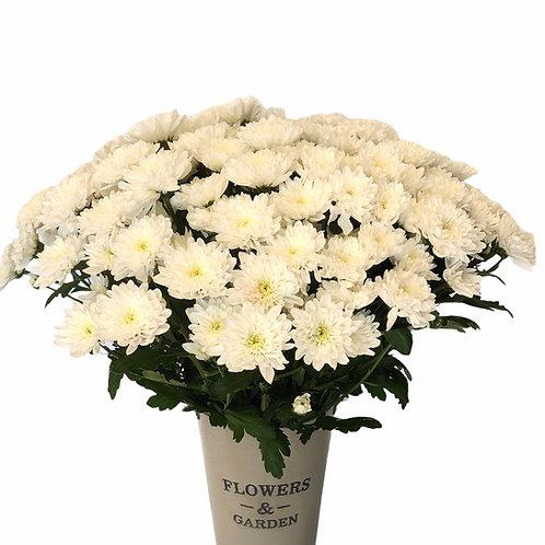 Chrysanthemums (white)