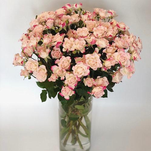 Smulkiažiedės rožės - 70cm (šviesiai rožinės su baltu)