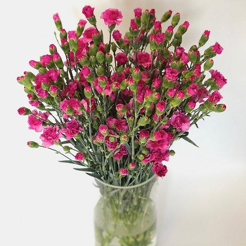 Gvazdikėliai (tamsiai rožiniai)