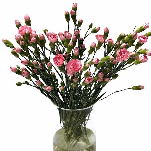 Gvazdikėliai (šviesiai rožiniai)