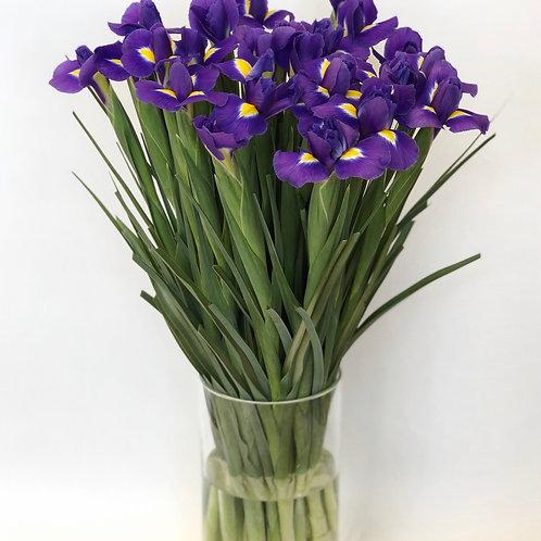 Irisai (mėlyni)