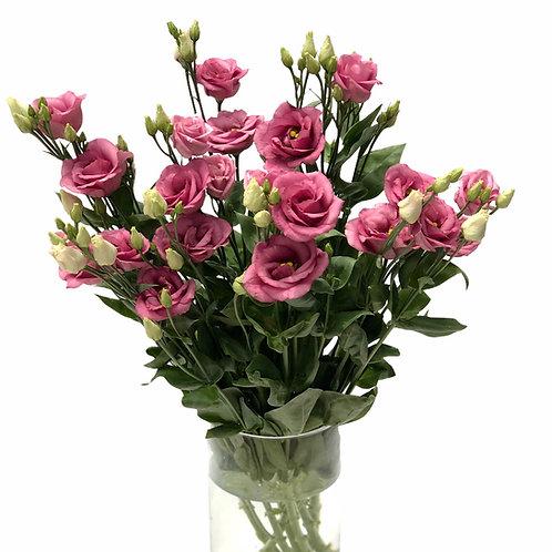 Eustoma (rožinė)