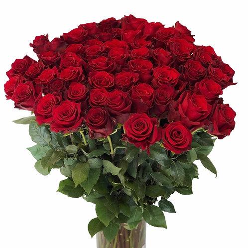 Rožės - 70cm (raudonos)