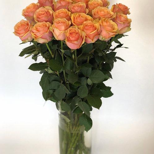 Rožės - 70 cm (persikinės)
