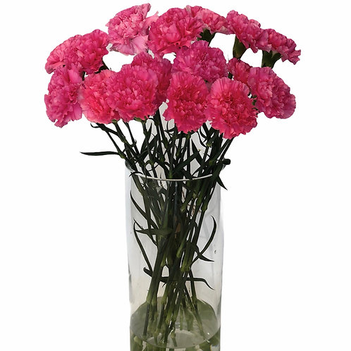 Carnations (pink)