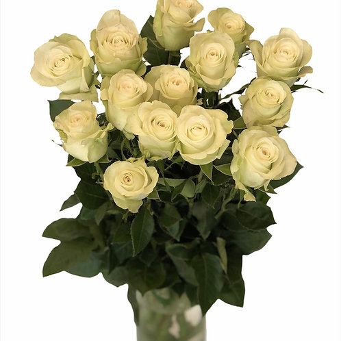 Roses - 60cm (white)