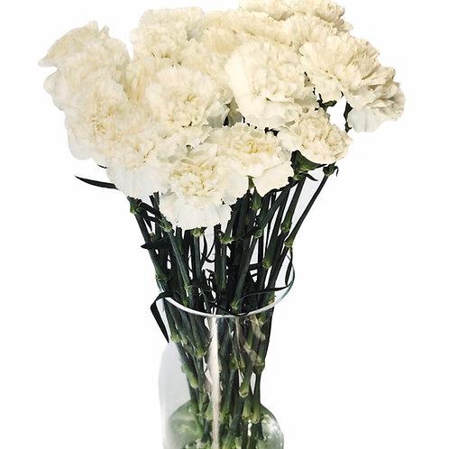 Carnations (white)
