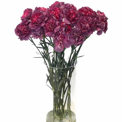 Carnations (purple)