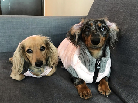 Creature Feature   Pooch of the Week: Mossi & Nysa