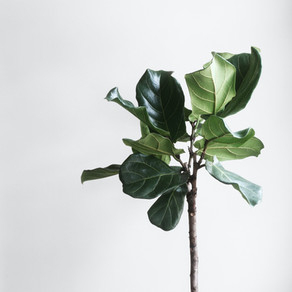 Light Up Your Home with These Plants, Delivered Directly to Your Doorstep