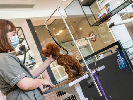 The Best Luxury Dog Groomers in Hong Kong