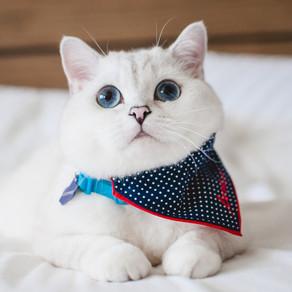 Creature Feature: White Coffee Cat